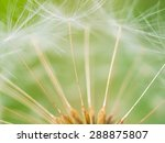Closeup Of Dandelion   Natural...