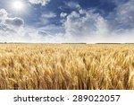 wheat field | Shutterstock . vector #289022057