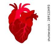 human's heart  red heart ...   Shutterstock .eps vector #289123493
