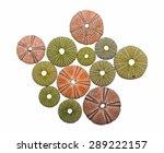 various sea urchin shells... | Shutterstock . vector #289222157
