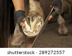Farrier At Work On Horses Hoof