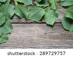 green leaves on a wooden border | Shutterstock . vector #289729757