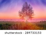 foggy summer landscape with... | Shutterstock . vector #289733153