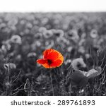 Red Poppy Flowers For...