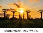 beautiful baobab trees at... | Shutterstock . vector #289795847