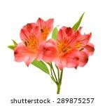 Bouquet Of Alstroemeria Flower...