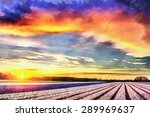Hyacinth Field At Sunset. ...