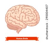 human brain. three quarter view.... | Shutterstock .eps vector #290004407