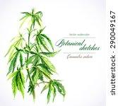 vector botanical watercolor...   Shutterstock .eps vector #290049167