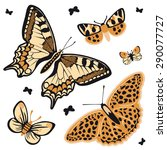Leopard Butterfly Set Vector...