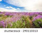 lavender  provence alpes cote d'...   Shutterstock . vector #290110313