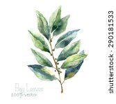 Watercolor Bay Leaf. Hand Draw...