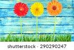 flower  daisy  grass.