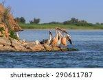 white pelicans  pelecanus...   Shutterstock . vector #290611787
