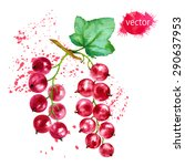red currants  watercolor... | Shutterstock .eps vector #290637953