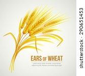 Ears Of Wheat. Vector...