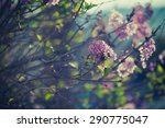 purple spring lilac flowers... | Shutterstock . vector #290775047