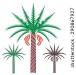 Palm Tree. Eps 10. Vector...