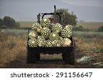 tequila  jalisco  mexico  ... | Shutterstock . vector #291156647