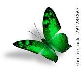 Beautiful Flying Green...