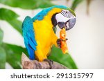 Colorful Parrot Eating On A...