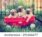 Stock photo three pug chihuahua mix chug puppies in a red wagon toned with a retro vintage instagram 291366677