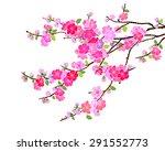 pink cherry blossom  sakura... | Shutterstock .eps vector #291552773