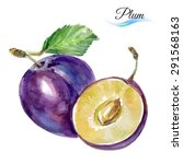 plum drawing watercolor... | Shutterstock .eps vector #291568163