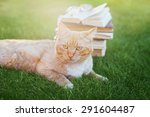 Portrait Of Cute Cat With Book...