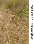 Small photo of Agrostis gigantea by the wind in a meadow. Selective focus. Abstract background.
