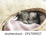 Stock photo cute tabby kittens sleeping and hugging in a basket 291709037