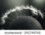 dandelion seeds macro | Shutterstock . vector #291744743