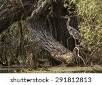 great blue heron in danube delta | Shutterstock . vector #291812813