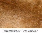 Mountain Lion Fur Background...