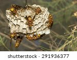 common large paper wasp nest | Shutterstock . vector #291936377