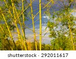 Green Bamboo On The Blue Sky...