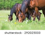 Horses Grazing In Summer...