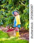 kids picking cherry on a fruit... | Shutterstock . vector #292082087