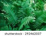 vintage photo of fern  tree ... | Shutterstock . vector #292462037
