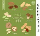 organic nuts set. pecan  almond ... | Shutterstock .eps vector #292523903