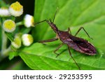 The small bug woth white flower! - stock photo