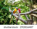 Parrot Bird Sitting On The...