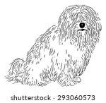 vector   rare dog   coton de... | Shutterstock .eps vector #293060573