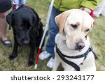 blind people and guide dogs... | Shutterstock . vector #293243177