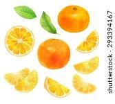 orange citrus slice leaves...   Shutterstock . vector #293394167