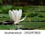 Beautiful Blooming Flower  ...