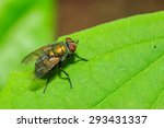 fly | Shutterstock . vector #293431337