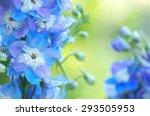 beautiful blue flowers blooming ... | Shutterstock . vector #293505953