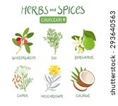 herbs and spices collection 9.... | Shutterstock .eps vector #293640563