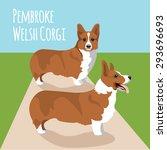 welsh corgi pembroke vector... | Shutterstock .eps vector #293696693